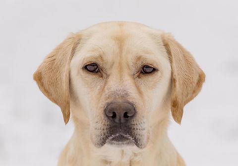 Dog Calendar - January.jpg