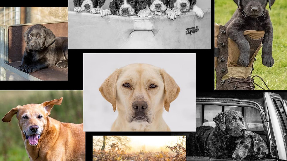 Calendars - various subjects. Prices starting from