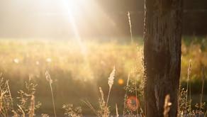 Bring Me The Sunshine Spray by Gypsy Willowmoon
