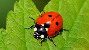 Ladybird/Ladybug by Heather