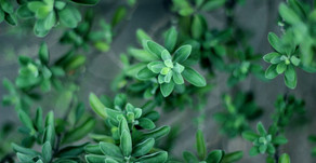The magic of thyme by Vanessa Armstrong