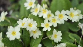 Flowers of February by Rachel Patterson