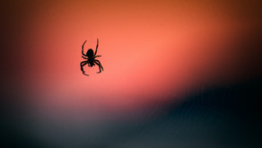 The Magic of Spider by Ness