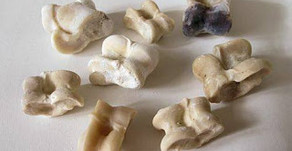The Oracle Bones (Astragali) by Starlit