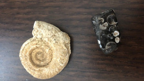 The Magic of Fossils by Ness Armstrong