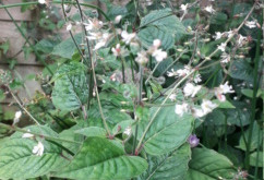 Enchanters Nightshade Part 2 by Heather