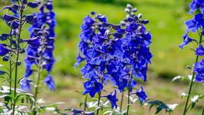 Flowers of July by Rachel Patterson