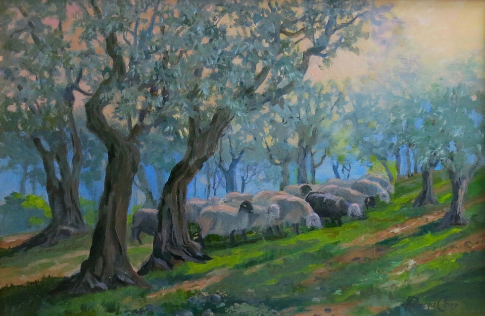 Among the Olive Trees in Umbria