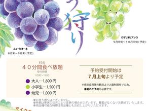 8月26日(木)~葡萄狩り開催
