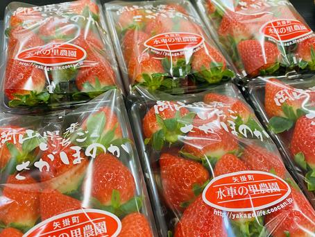さがほのか苺販売中です