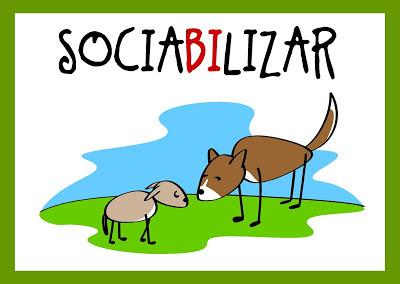 ¿Es lo mismo socializar que sociabilizar?