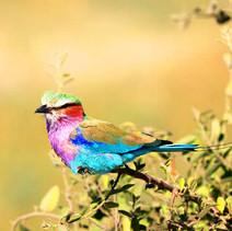 bunter-Vogel-Botswana.jpg