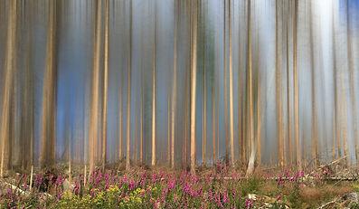 Harz Wald.jpg