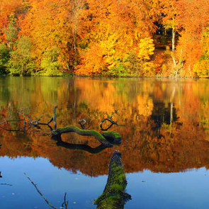 Herbst auf Rügen.jpg