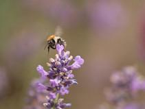 Lebensraum schaffen für Insekten