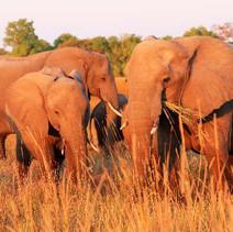Elefantenherde1.jpg