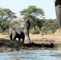 Elefantenjunges.jpg