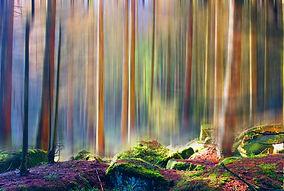Harz Herbst.jpg