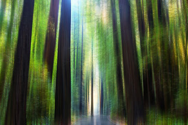 Redwood Wald.jpg