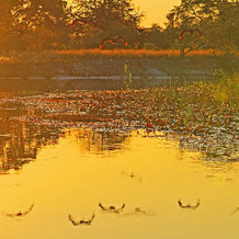 Okavango1.jpg