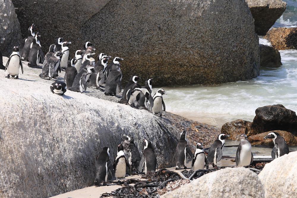 Boulderstrand Pinguinkolonie