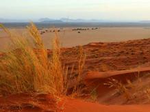 Namibia6.jpg