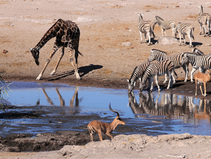 Der Etosha Nationalpark