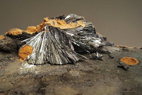 16,5 cm Vivianite from Chernomorsky Mine, Kerch Peninsula, Crimea, Russia