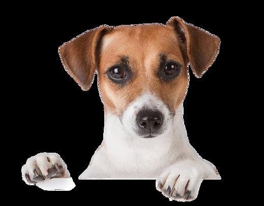 dog_PNG50375.png