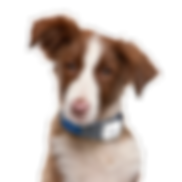 dog_PNG50363.png