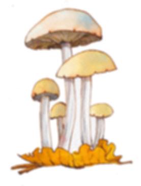 Sulphur Tuft Toadstool