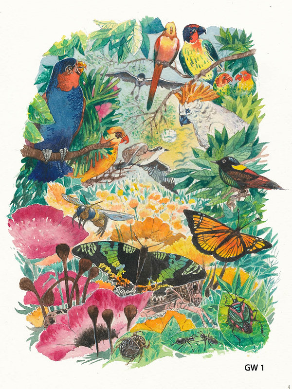 birds, flowers, insects