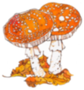 Fairy tale toadstool