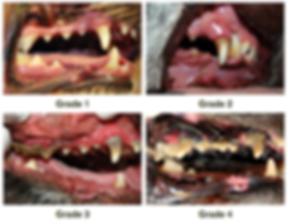 Dental Grades.png