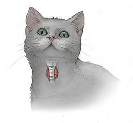 Catthyroidgland_0.jpg