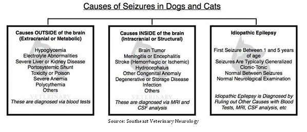 Causes of seizures.png