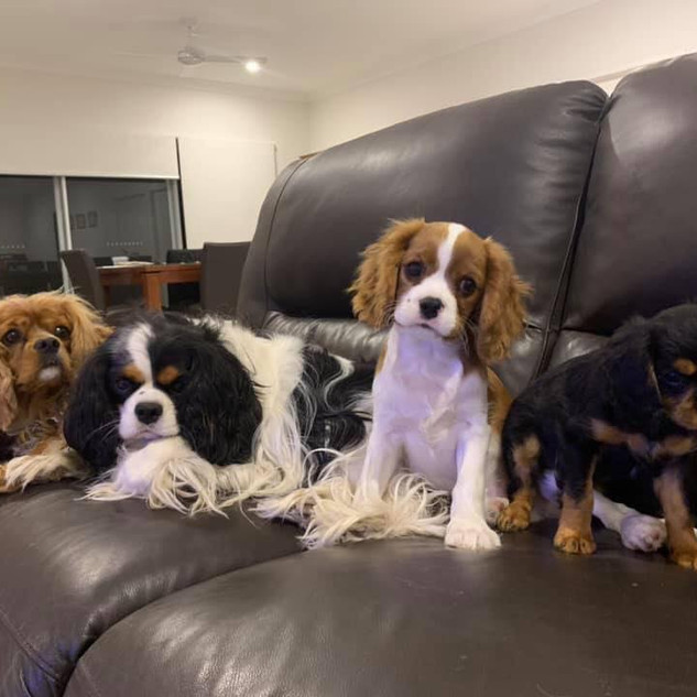 Ruby, Zoe, Teddy & Lilly