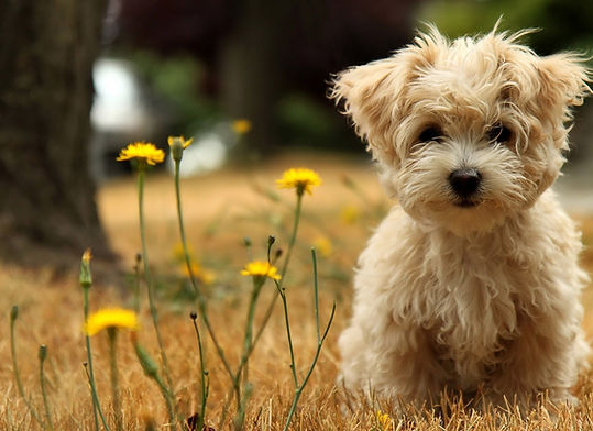 Cute-Dog-Pictures-on-The-Garden.jpg
