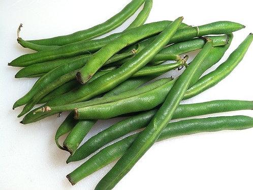 Haricot vert Bio