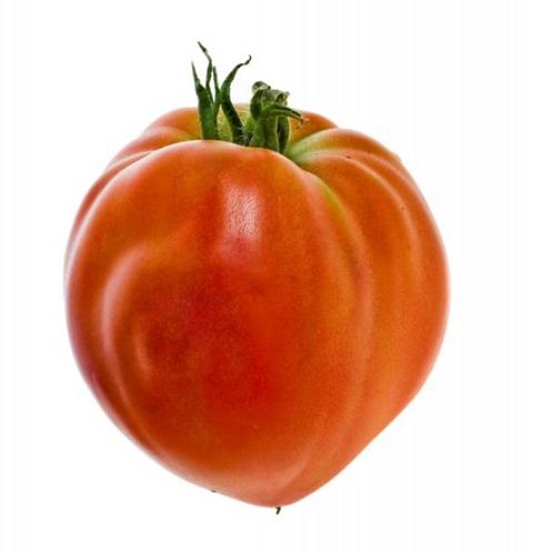 Tomate cœur de boeuf bio