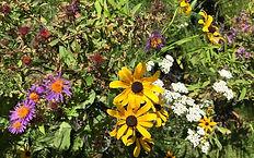 Pollinator Kit Fall Close Up.jpg