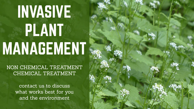Invasive Plants copy.jpg