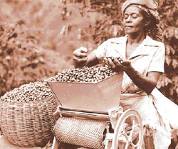 Jamaika Kahve Orijini