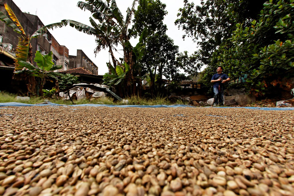 Endonezya Kahvesi