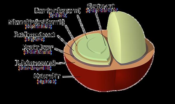 Washed Process  (Suda Yıkanarak İşleme)