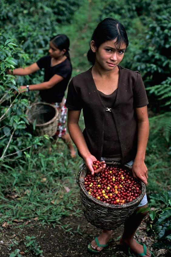 Honduras Kahve Orijini