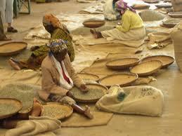 Malavi Kahve Orijin