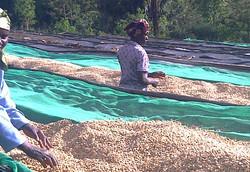 Ruanda Kahve Orijin