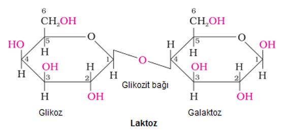 Süt bileşenleri