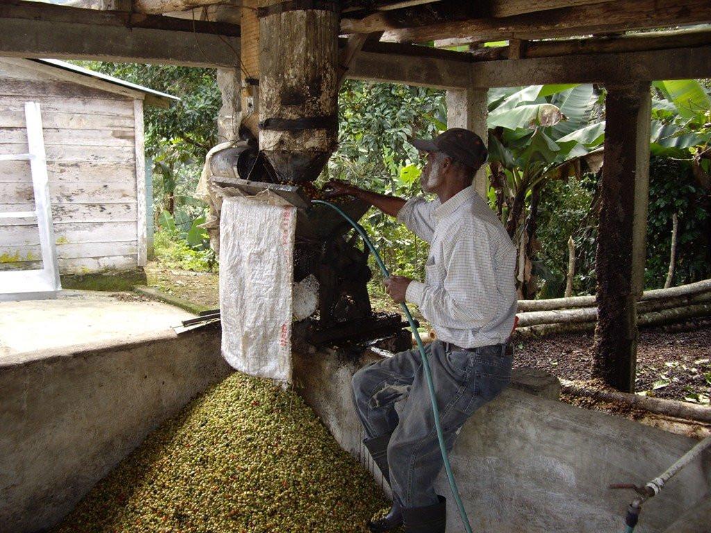 Küba Kahve Orijin